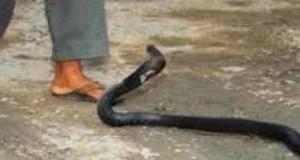 Snake 2