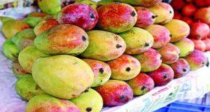 Mango Sundori