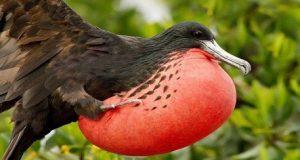 red-brested-bird