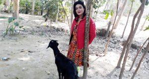 Mahi Goat