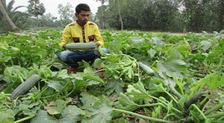Sqous Vegetable