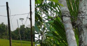 Chandpur-Biddut-Picture