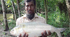 Ilish chandpur
