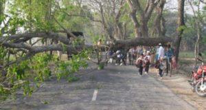 Tree Horulut