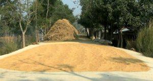 Dry rice