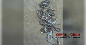 snake-attack-hajiganj