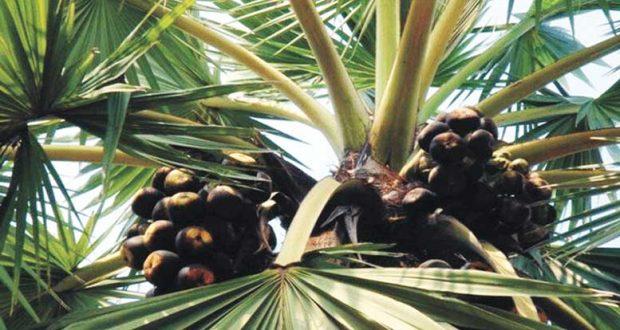 Tal-Tree