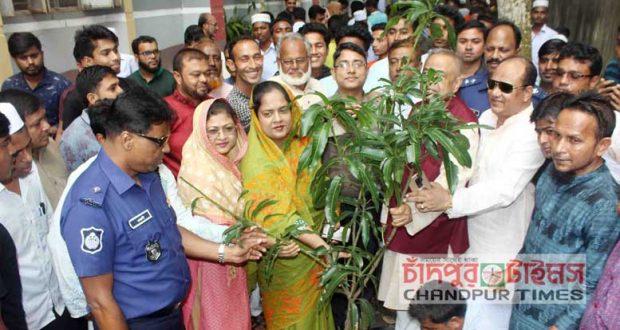 majighasa-tree-plantation