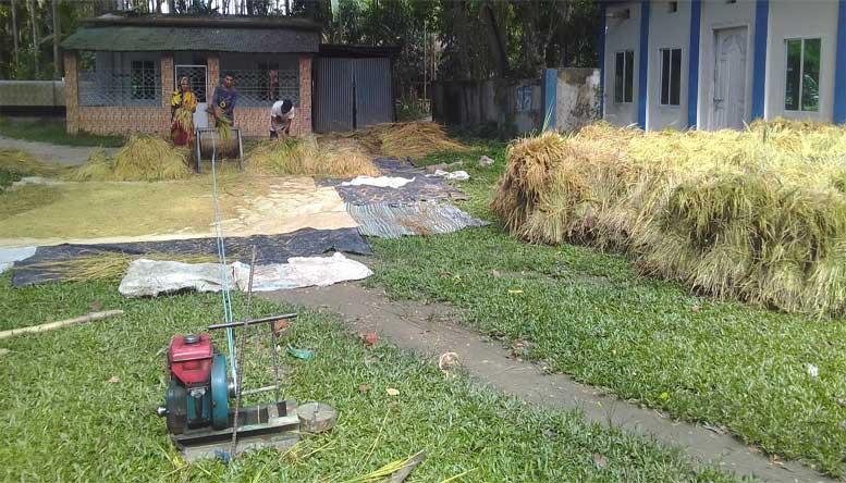চাঁদপুরে ইরি-বোরো মাড়াইয়ে ব্যস্ত কৃষাণ-কৃষাণী : ৮৫% ধান কর্তন