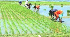 Farmar