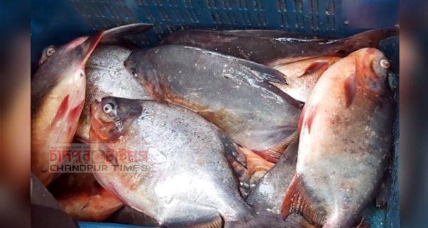 পিরানহা মাছ